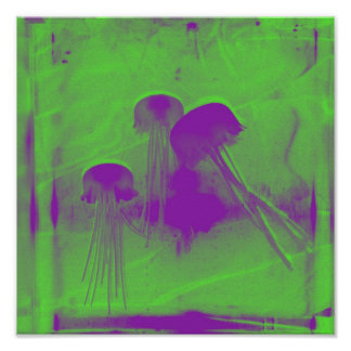 Acid Cnidaria Poster