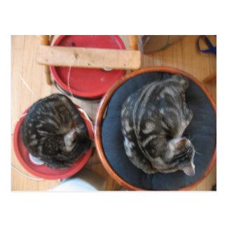 Acorn and Cashew Cat postcard