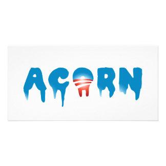 ACORN PHOTO CARDS