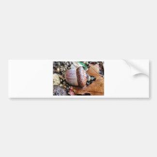 Acorn Resting Bumper Sticker