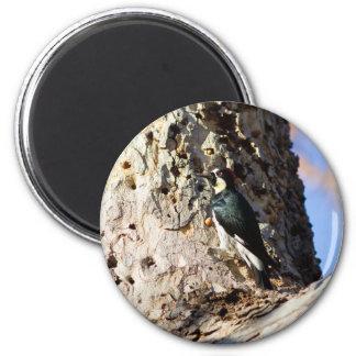 Acorn Woodpecker 2 Inch Round Magnet