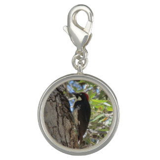 Acorn Woodpecker Charms