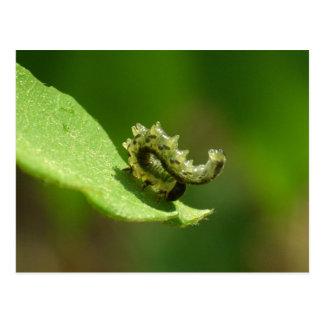 Acrobat - Green caterpillar headstand Postcard