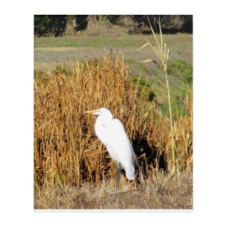 Acrylic Art - White Egret in Grass