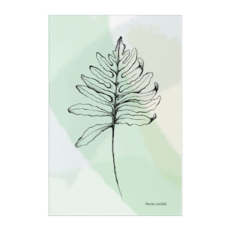 "Acrylic Wall Art, 24"" x 36""- Sensitive Fern Acrylic Print"