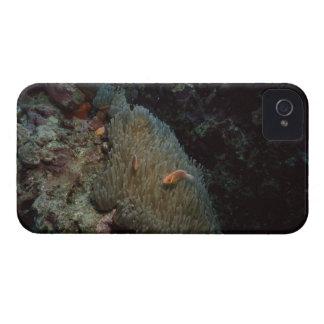 Actinia iPhone 4 Case