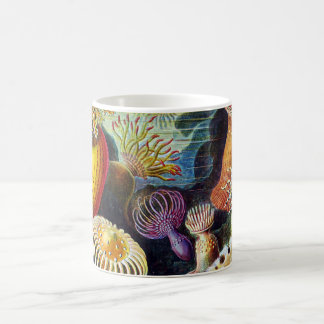 Actiniae by Ernst Haeckel Coffee Mug