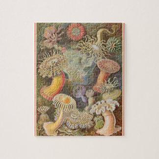 Actiniae - Ernst Haeckel 8x10 Jigsaw Puzzle