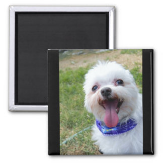 Add a Pet Photo or Image Fridge Magnet