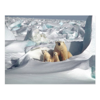 Add SLOGAN to Save Arctic Polar Bears Planet Ice Postcard