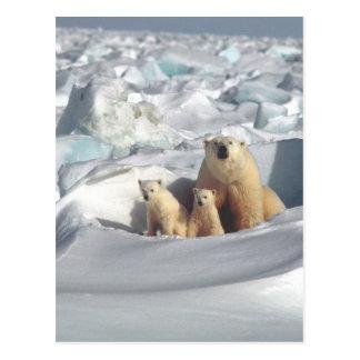 Add SLOGAN to Save Arctic Polar Bears Planet Ice Postcard