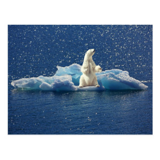 Add SLOGAN to Save Polar Bears Arctic Planet Ice Postcard