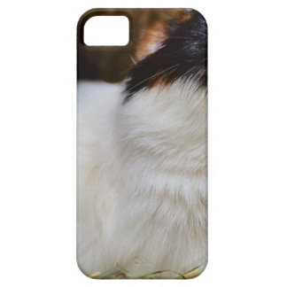 Add Your Own Text Funny Guinea Pig iPhone 5 Cover