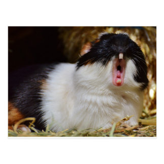 Add Your Own Text Funny Guinea Pig Postcard