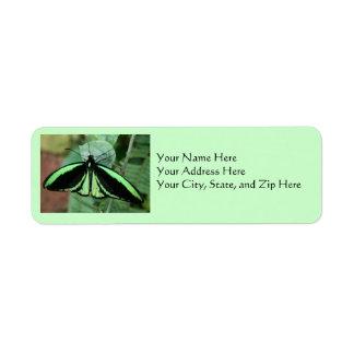 Address Labels: Green Butterfly Return Address Label