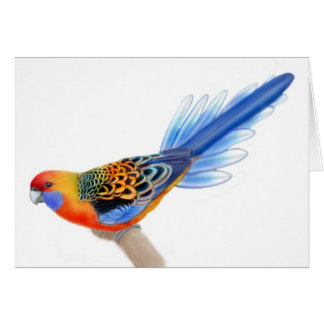 Adelaide Rosella Parrot Card