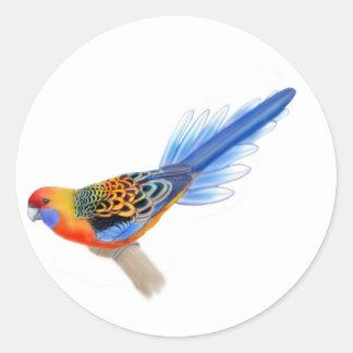 Adelaide Rosella Sticker