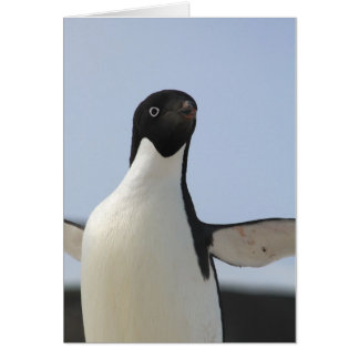 Adelie Penguin Card