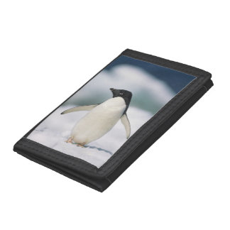 Adelie penguin, close-up trifold wallet