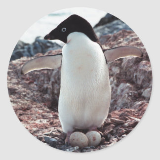 Adelie Penguin Nest Sticker