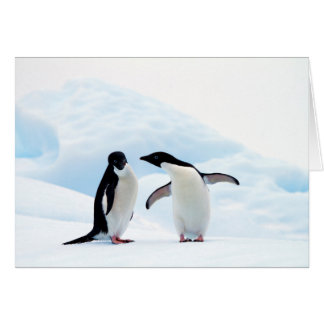Adelie Penguins Card