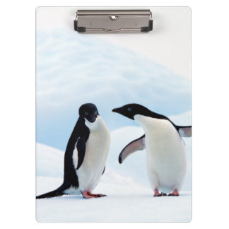 Adelie Penguins Clipboard