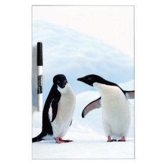 Adelie Penguins Dry Erase Board