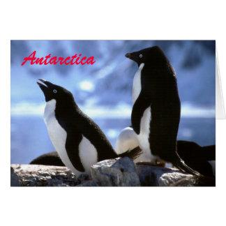 Adelie Penguins in Antarctica Greetings Card