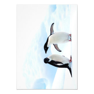Adelie Penguins Magnetic Invitations