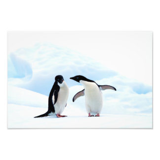 Adelie Penguins Photo Print