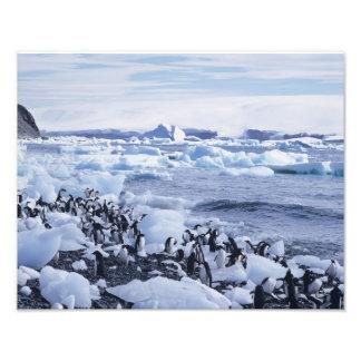 Adelie Penguins Pygoscelis adeliae) among the Art Photo