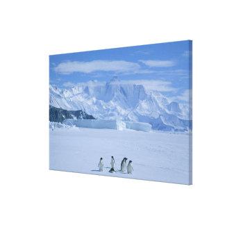Adelie Penguins, Pygoscelis adeliae), Canvas Prints