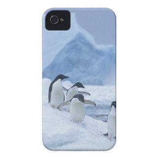 Adelie Penguins (Pygoscelis adeliae) on ice, iPhone 4 Covers