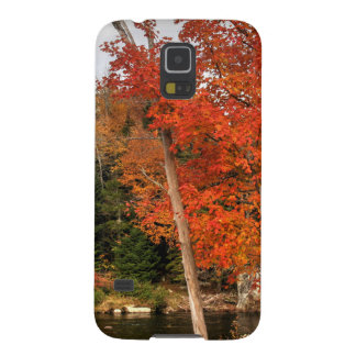 Adirondack Autumn Cases For Galaxy S5