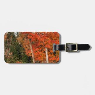 Adirondack Autumn Luggage Tag