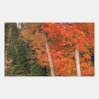 Adirondack Autumn Sticker