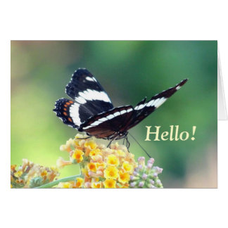 Admiral Butterfly Greeting Card