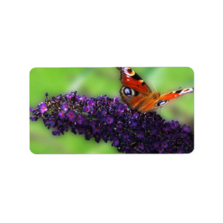 Admiral in the Butterfly Bush