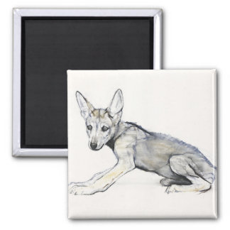 Adolescent Arabian Wolf Pup 2009 Square Magnet
