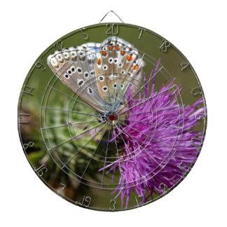 Adonis blue butterfly (Polyommatus bellargus) Dart Boards