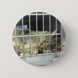 Adopt A Cat Button 001