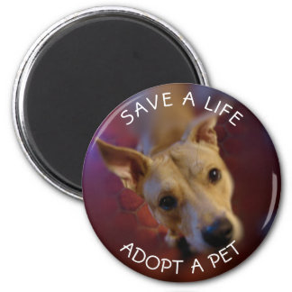 Adopt a Pet Rescue   Mixed Breed Cute Mutt Magnet