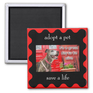 adopt a pet, save a life magnet