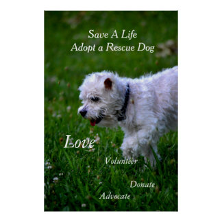 Adopt a rescue dog poster/poodle poster