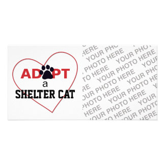 Adopt a Shelter Cat Photo Card Template
