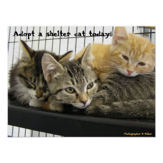 Adopt a shelter cat today poster