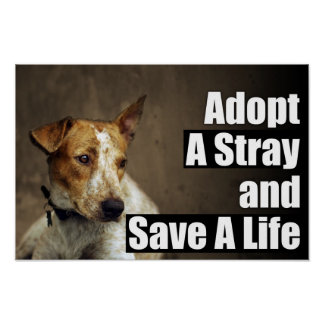 Adopt A Stray Poster