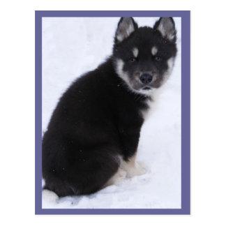 Adoptable Puppy Postcards #4
