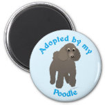 Adopted by my Poodle Magnets