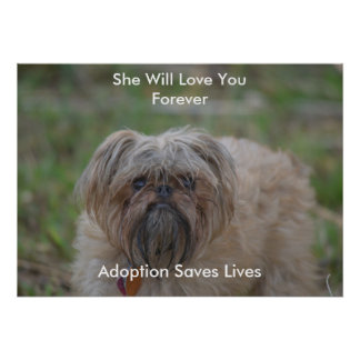 Adoption Saves Lives-dogs Poster